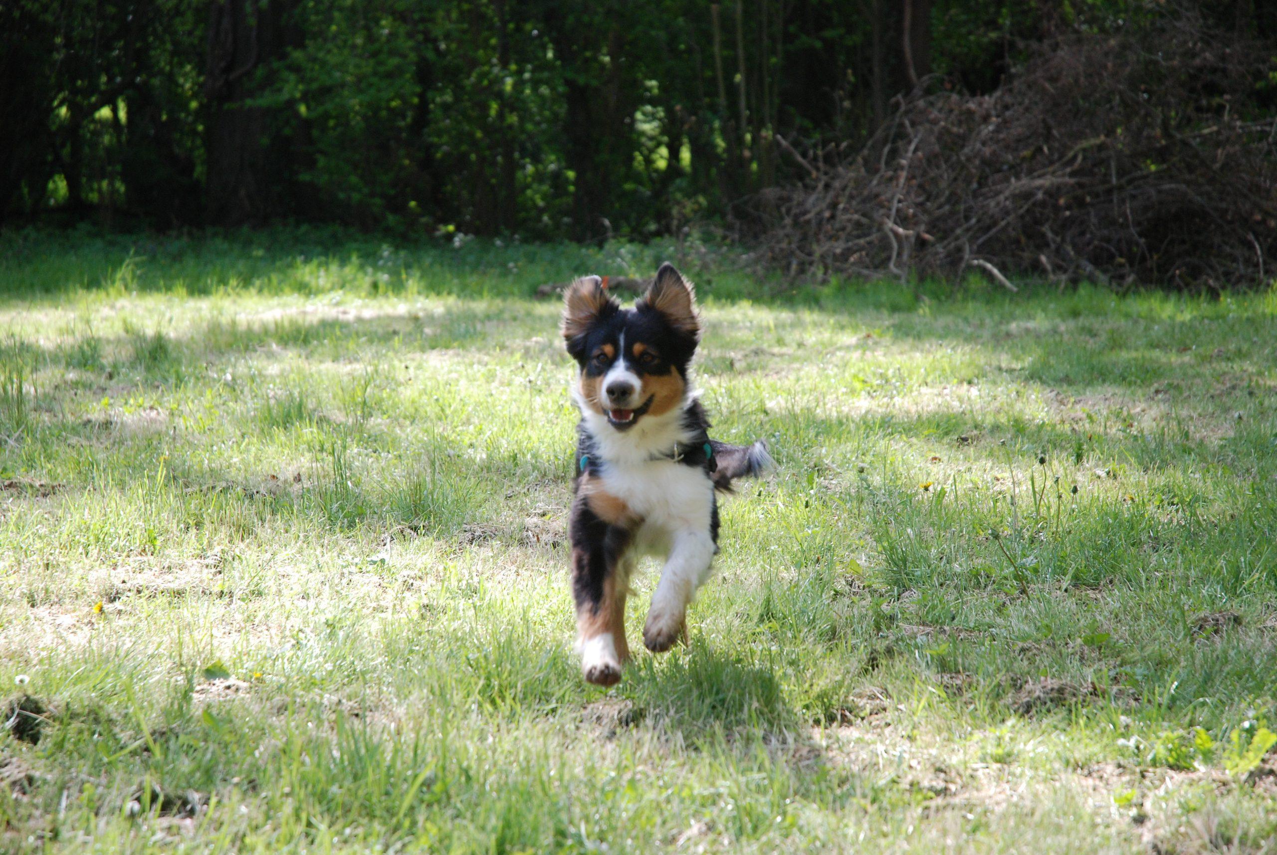 chiot adoption conseils éducateur canin loire montbrison
