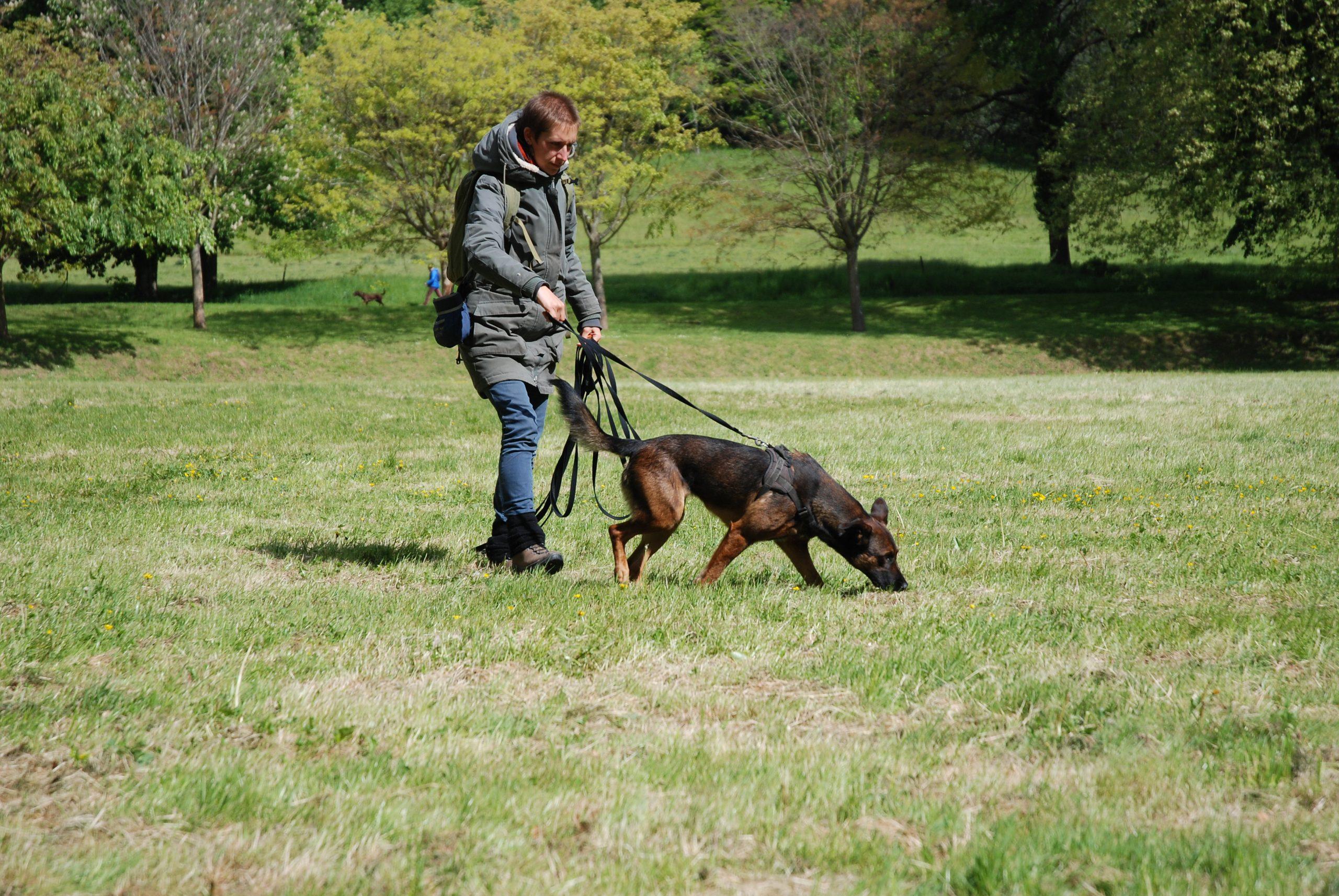 formation olfaction éducateur canin chiens flair dressage loire montbrison