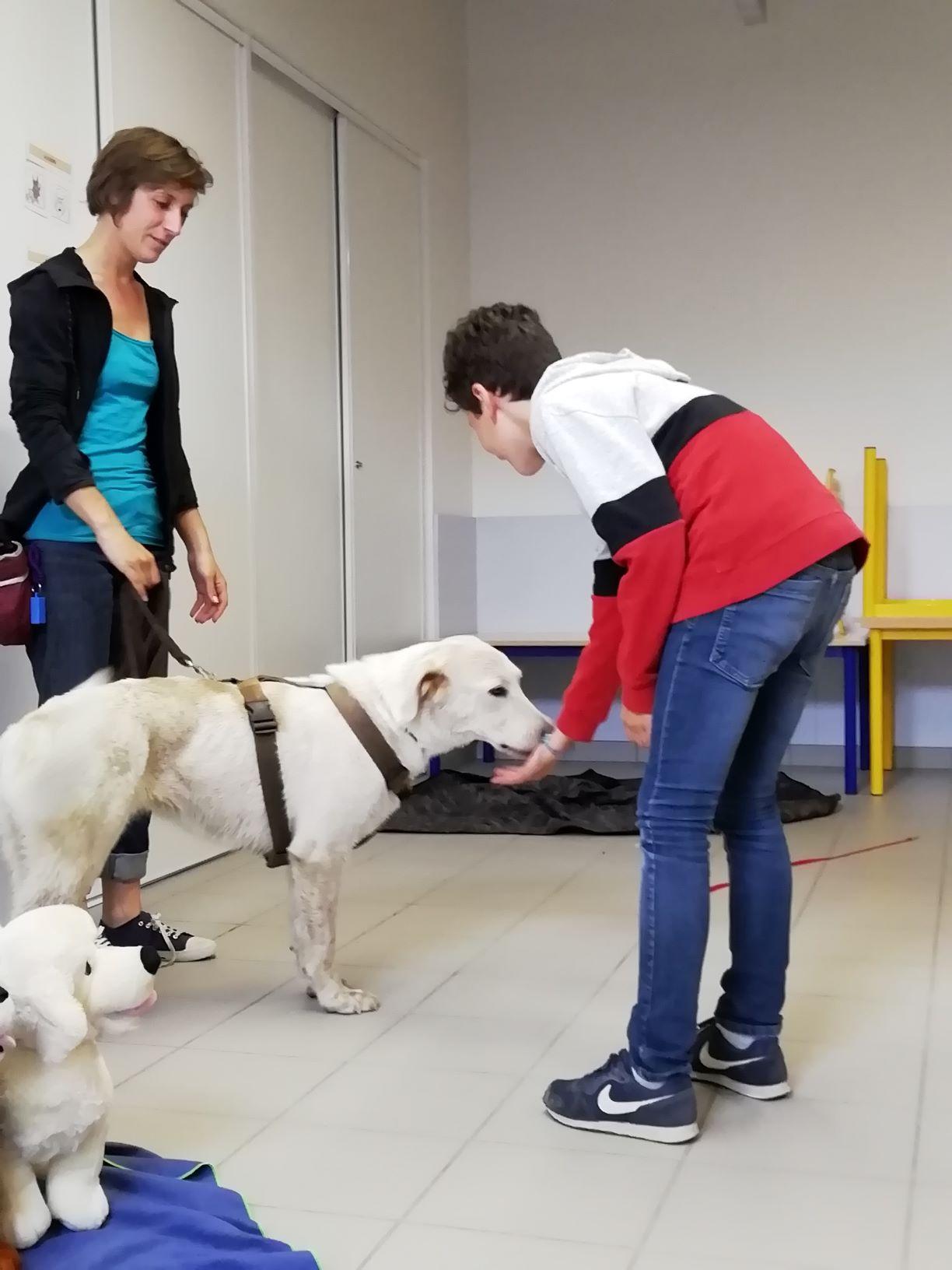 prévention morsures enfants chiens loire