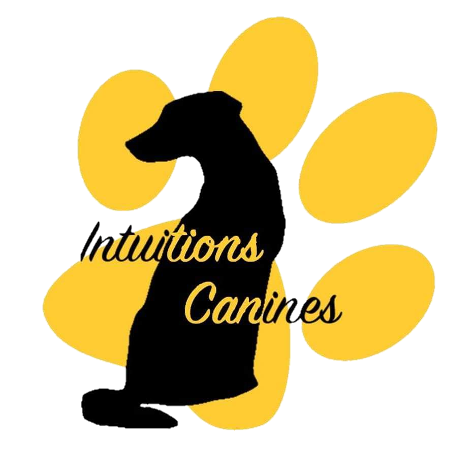 Logo intuitions canines chien patte education positive