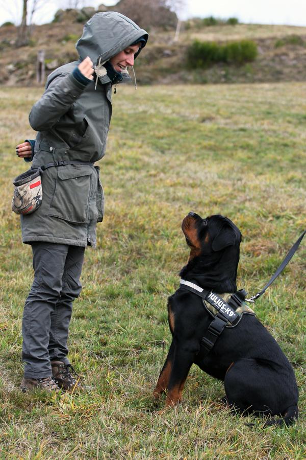 formation clicker éducateur canin loire
