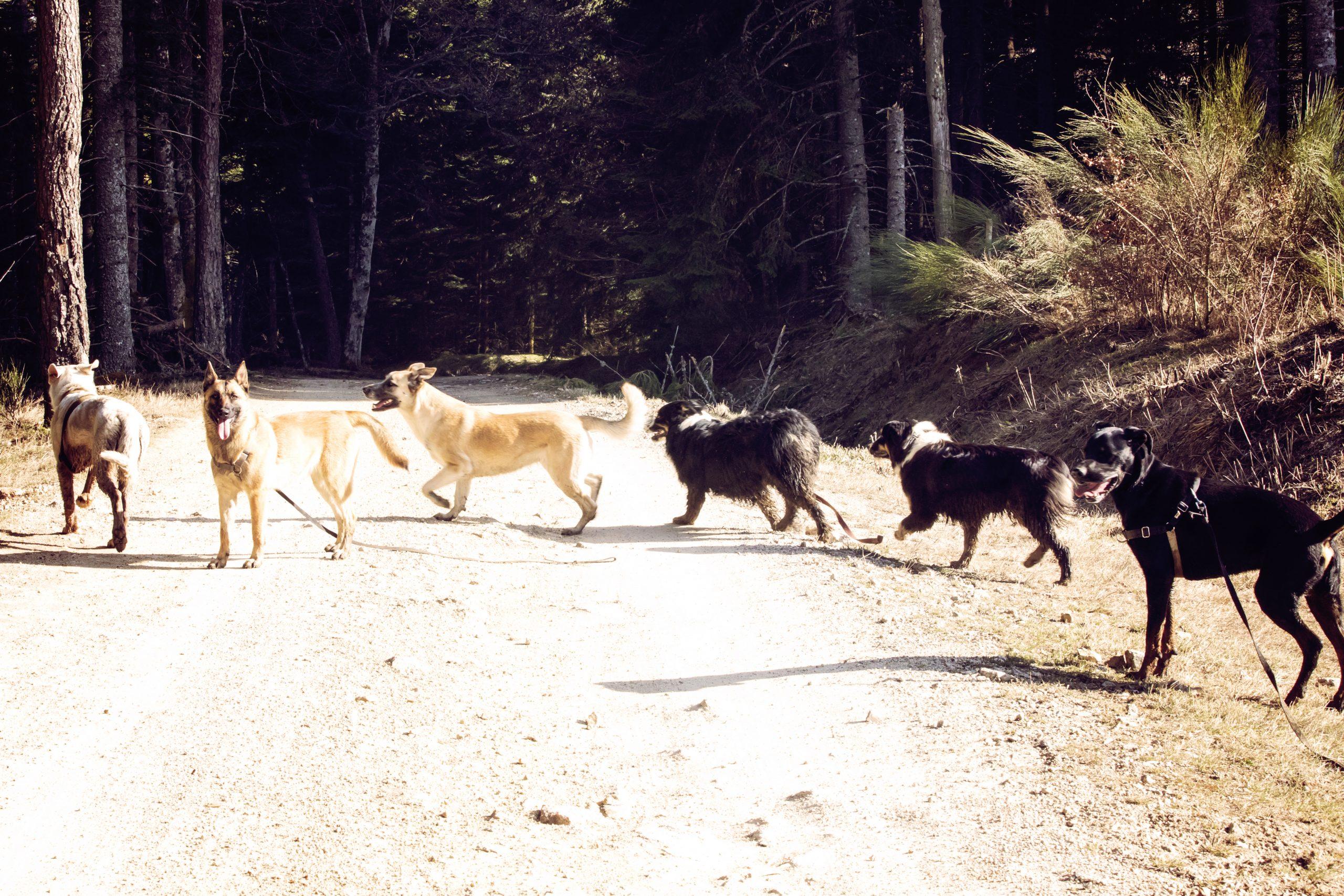 cours collectifs educateur canin méthode positive france loire
