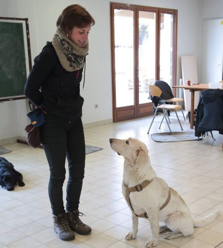 Héloïse Hallier, dressage éducation chien loire méthode positive