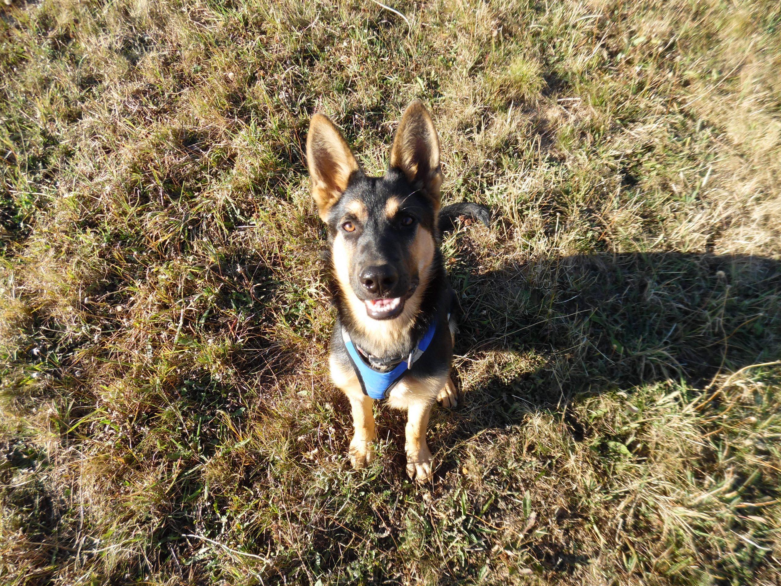 bilan comportemental chien canin educateur