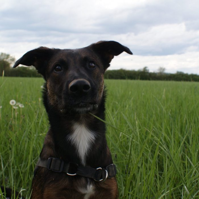 Photo chien educateur canin loire